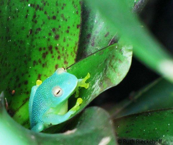 Super cute frog