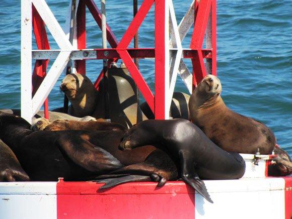 Sea lions in cute pose