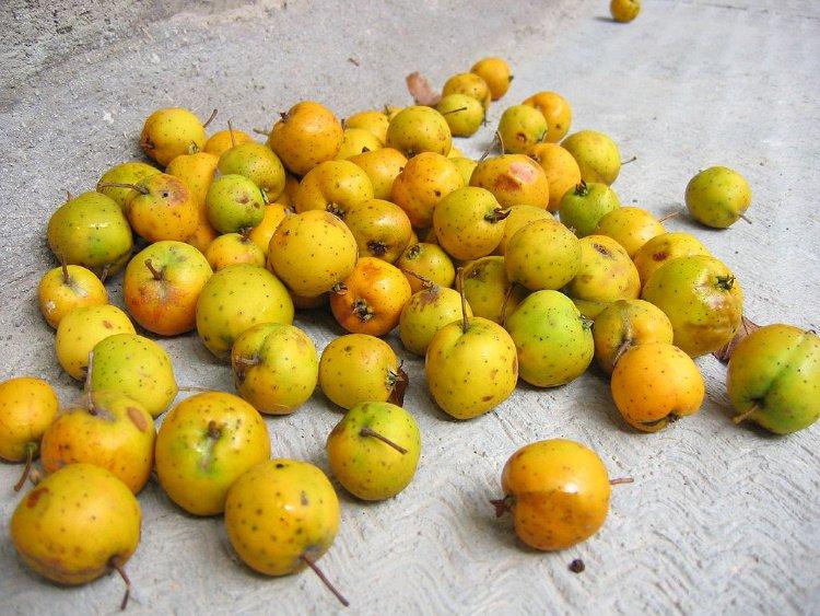 Manzanilla (El Salvador ) or Tejocote, Fruits in El Salvador