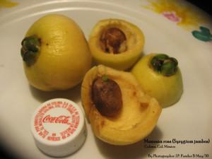 Manzana Rosa or Rose Apple