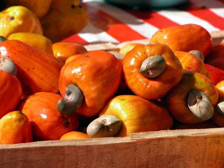 Cashew Fruit, Fruits El Salvador