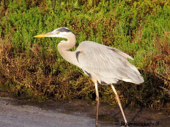Bolsa Chica Ecological Reserve, Huntington Beach, California