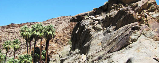 Palm Canyon: An Oasis Covered With Fan Palms