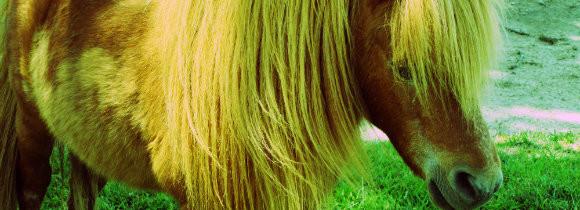 Quicksilver Miniature Horse Ranch
