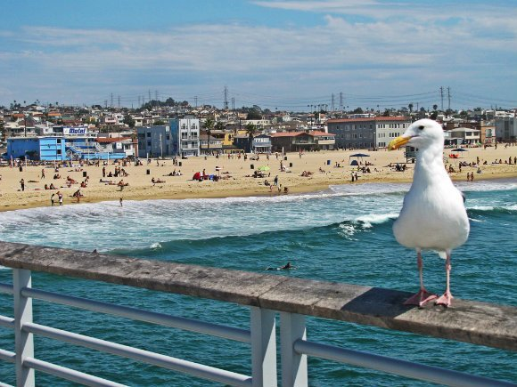 Seagull at Pier, Hermosa Beachseen from pier