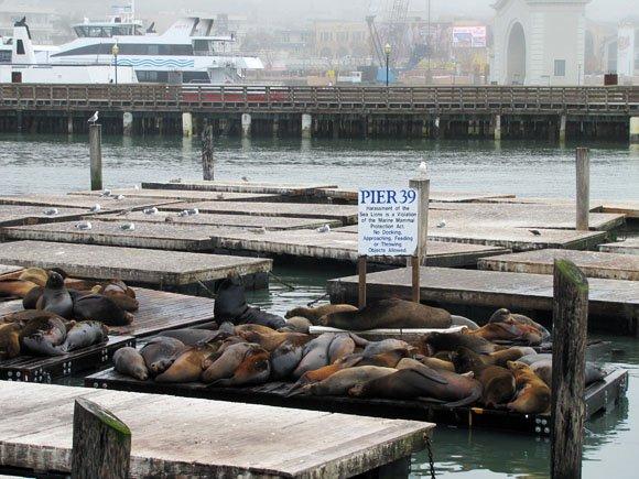 sea lions in pier, sea lions sleeping
