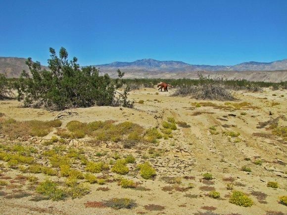 Ground Slot, Borrego Springs, California