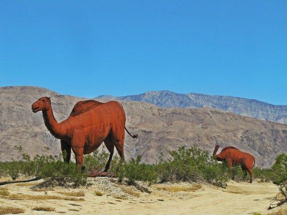 Camels, Borrego Springs, California