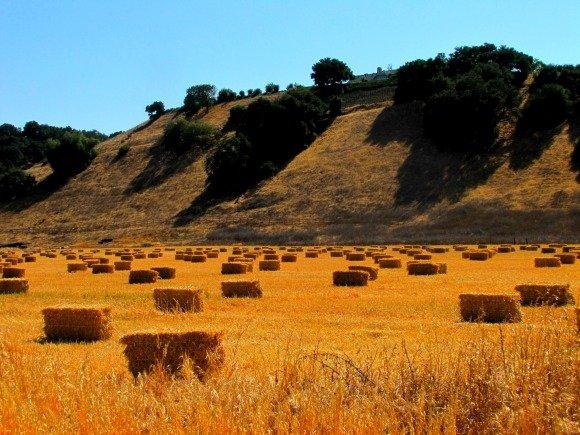 Rolling hills of the Santa Ynez Valley, Santa Barbara County, California