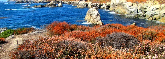 Highlights of Garrapata State Park
