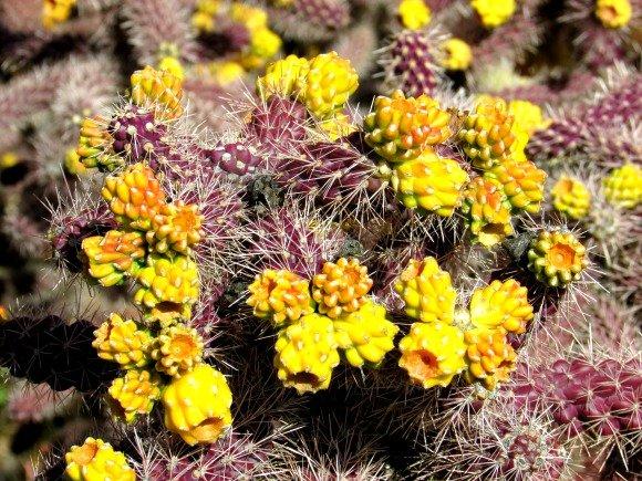Cactus, Chapel Road of the Holy Cross, Sedona, Arizona
