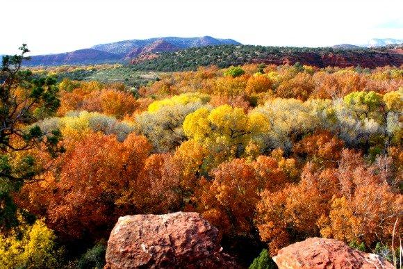 Oak Creek and Fall Colors, Sedona, Arizona