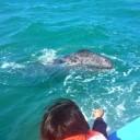 Whale Watching in Baja California