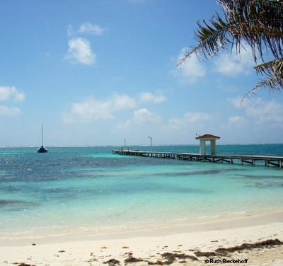 Papillon Photos: Ambergris Caye, Belize