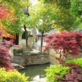 Colurful Trees in Luzhi Water Town, China