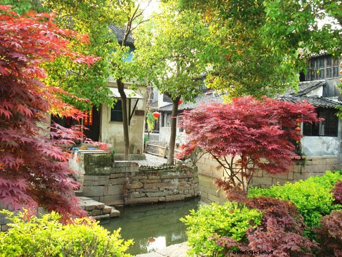 Colurful Trees in Luzhi Water Town