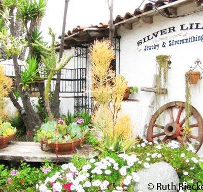Papillon Photos: Old Town San Diego