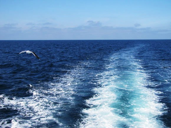 Whale Watching in Newport Beach, California,Seagull, sea and sky, Newport Beach, CA