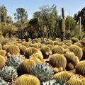 Cactus Garden, The Huntington, San Marino, California