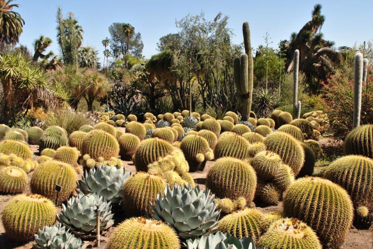 Cactus Garden, The Huntington, San Marino, California