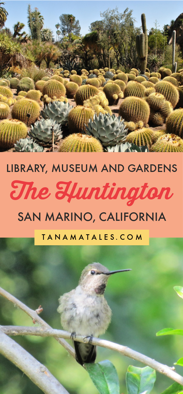 Everything you need to know before visiting The Huntington Library, Art Museum, and Botanical Gardens | San Marino | California | Things to Do in Los Angeles | Things to Do in Pasadena | Near Pasadena Old Town | Pasadena Photoshoot | Pasadena Engagement Photos | Pasadena Aesthetic | Los Angeles Outdoors | Cacti Garden | Japanese Garden | Chinese Garden | Conservatory | Lily Ponds | Los Angeles Botanical Gardens