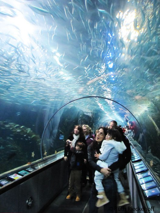 A Tale Of Two Aquariums In San Francisco Tanama Tales