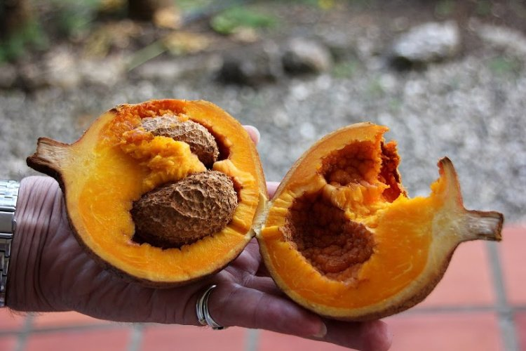 Mamey of El Salvador, El Salvador Fruits