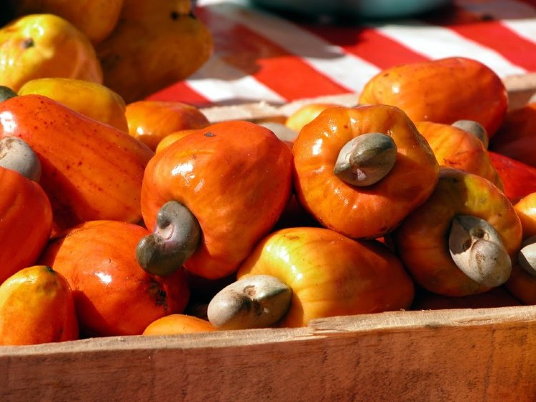 Cashew Fruit, Fruits El Salvador