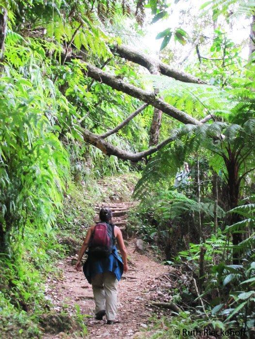 Hiking In The Lush Rainforest, Cerro Azul Meambar National