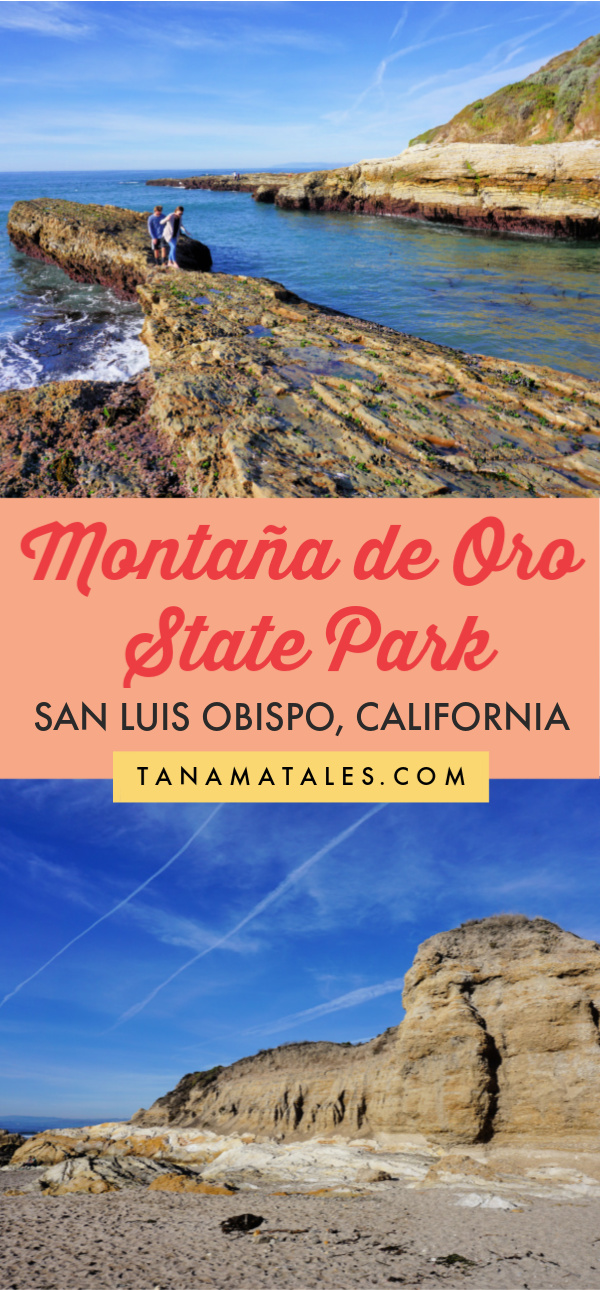 What to do in Montaña de Oro State Park, San Luis Obispo County, #California | Things to do in San Luis Obispo | Things to do in Morro Bay | Morro Bay State Park | Morro Rock | San Luis Obispo Itinerary | Things to do in Central California | Central California Itinerary