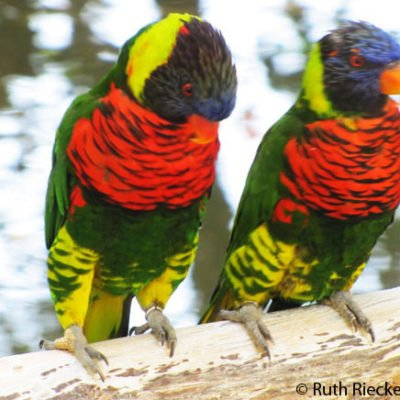 27 Great Photos of San Diego Safari Park