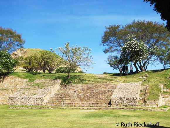 The trees that gave Monte Alban its name