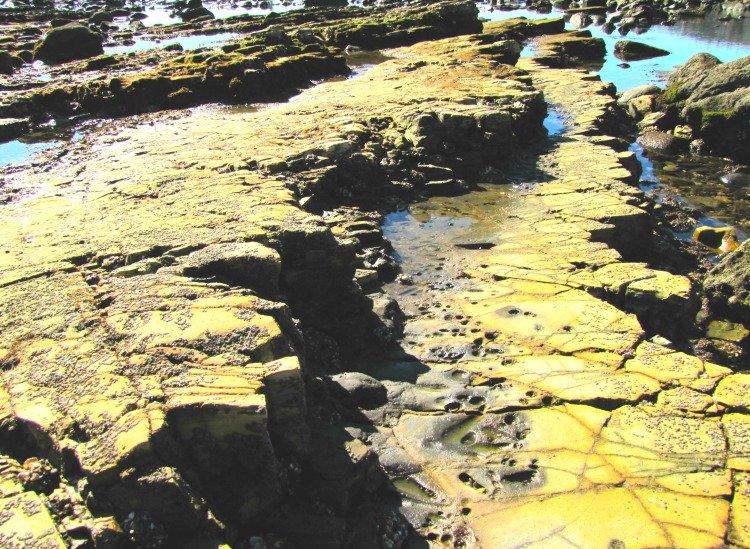 Tidepools at Abalone Cove Shoreline Park, Palos Verdes Peninsula, Los Angeles California