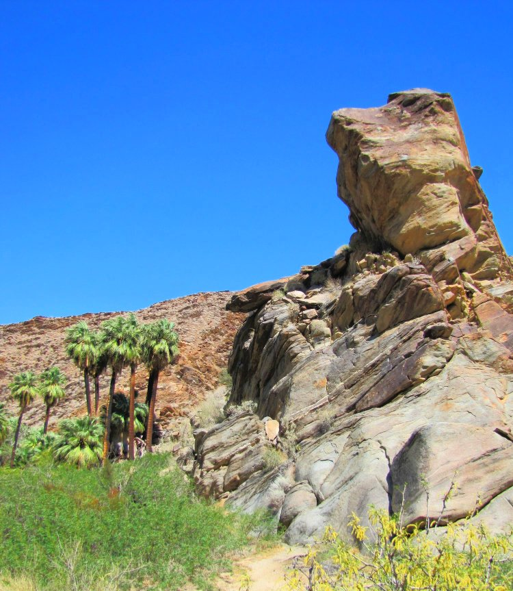 Palm Canyon Hike in Palm Springs, California