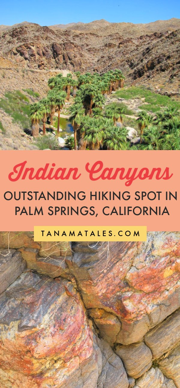 Things to do in Palms Springs and the Coachella Valley - The Indian Canyons offer outstanding opportunities to hike in different oases.  The canyons are full of fan palms, mule deer, bighorn sheep, and other species.  You can opt to hike Palm, Andreas or Murray Canyons.  The option is yours but the views are equally impressive. Stop by the #PalmSprings visitors center for more info. #Coachella #California