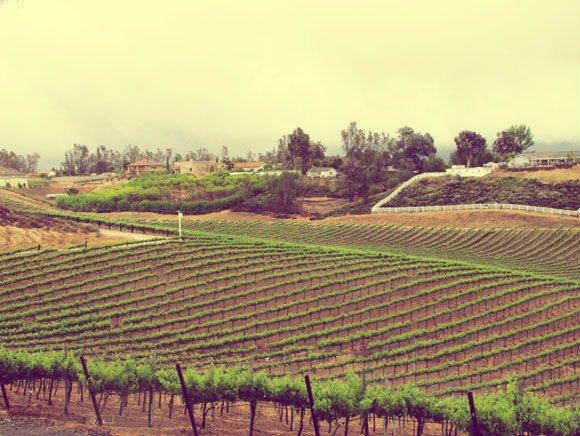 Vineyards, Temecula, California