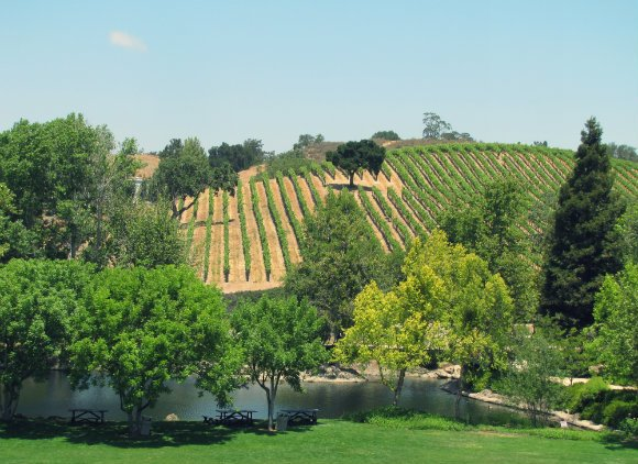 Vineyard in the Santa Ynez Valley, California