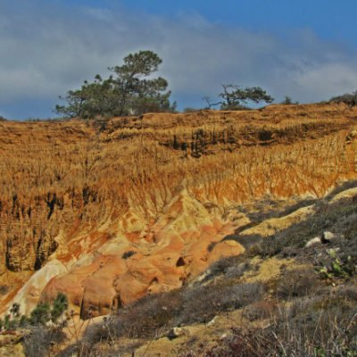 Torrey Pines: Rare Trees and Rock Formations