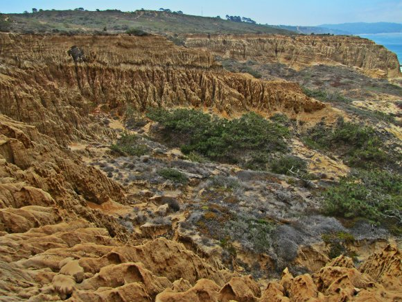 Razor Point, Torrey Pines State Reserve, San Diego, California