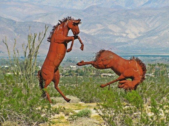 Horses, Borrego Springs, California