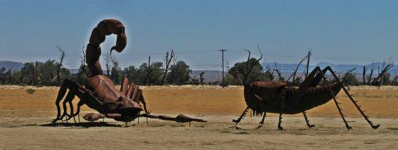 Scorpion / Grasshoper, Borrego Springs, California
