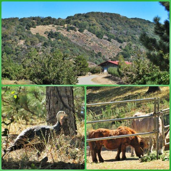 Things to do in Julian, California
