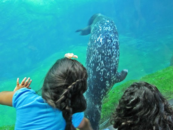 Girls interacting with harbor seal, Aquarium of the Pacific, Long Beach, California