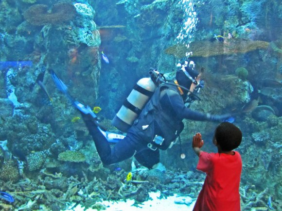Aquarium Of The Pacific Tanama Tales