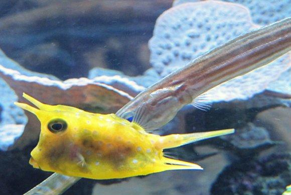 Yellow fish, Aquarium of the Pacific, Long Beach, California