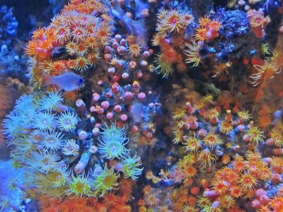 colorful sea aquarium of the pacific california
