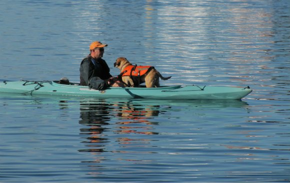 Kayaker and dog in Dana Cove, Dana Point, California