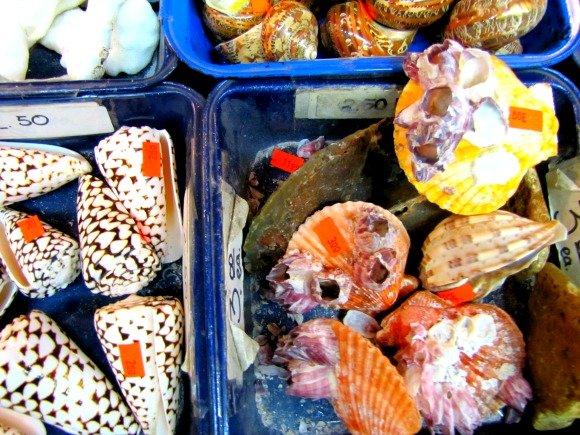 Shells from California Shell Company, Seal Beach, California