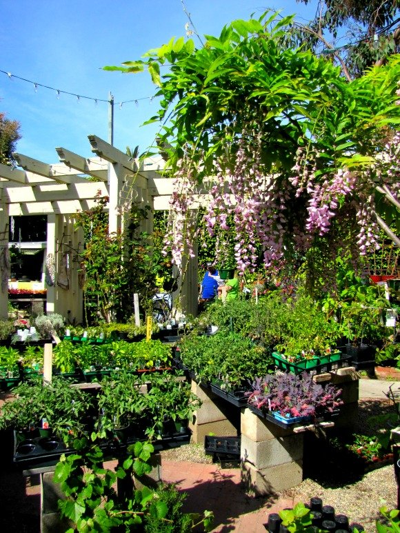 Brita's Old Town Garden, Seal Beach, California