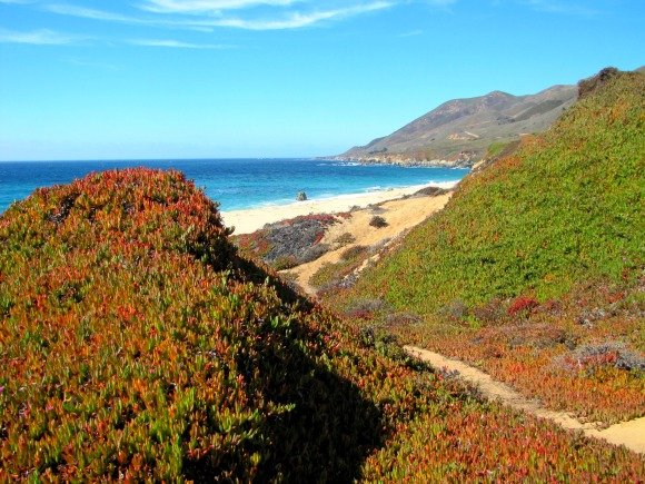 Trail to Garrapata Beach, Garrapata State Park, Big Sur, California